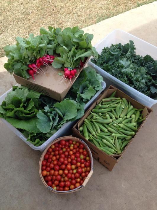 grow it forward Farms